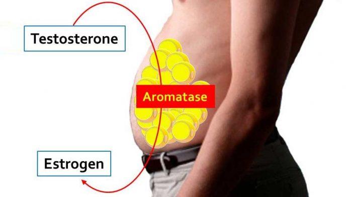 testosterone-estrogen